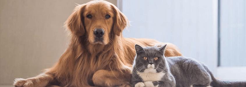 Hangi Hayvanlar Evcil Hayvan Alerjisine Sebep Olurlar